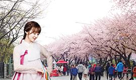 ทัวร์เกาหลี ชมซากุระ เดือนเมษายน 5วัน 3คืน บินจินแอร์(LJ)