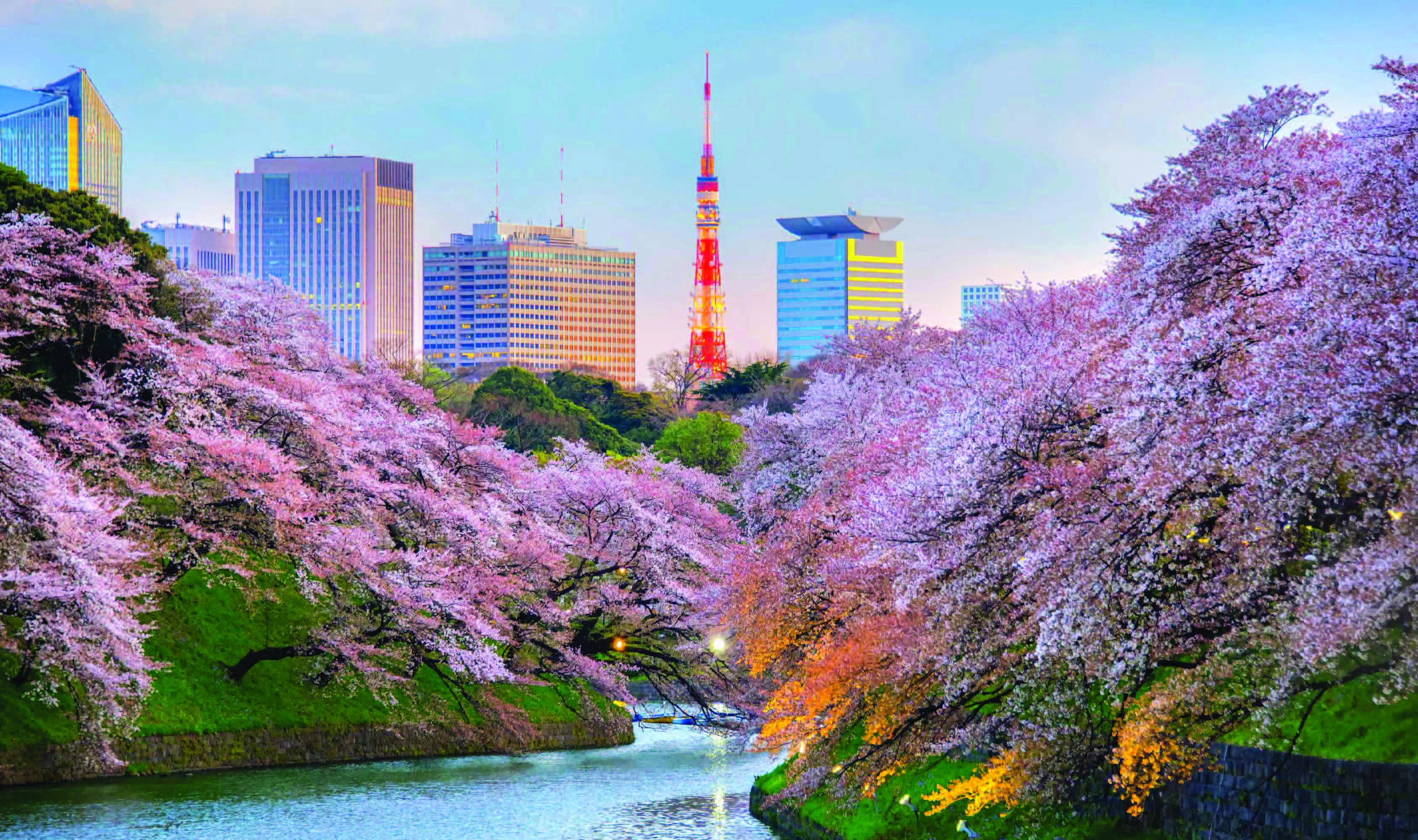 ทัวร์ญี่ปุ่น  WoW! Sakura โตเกียว ฟูจิ ซากูระ 4วัน 3คืน บิน XJ