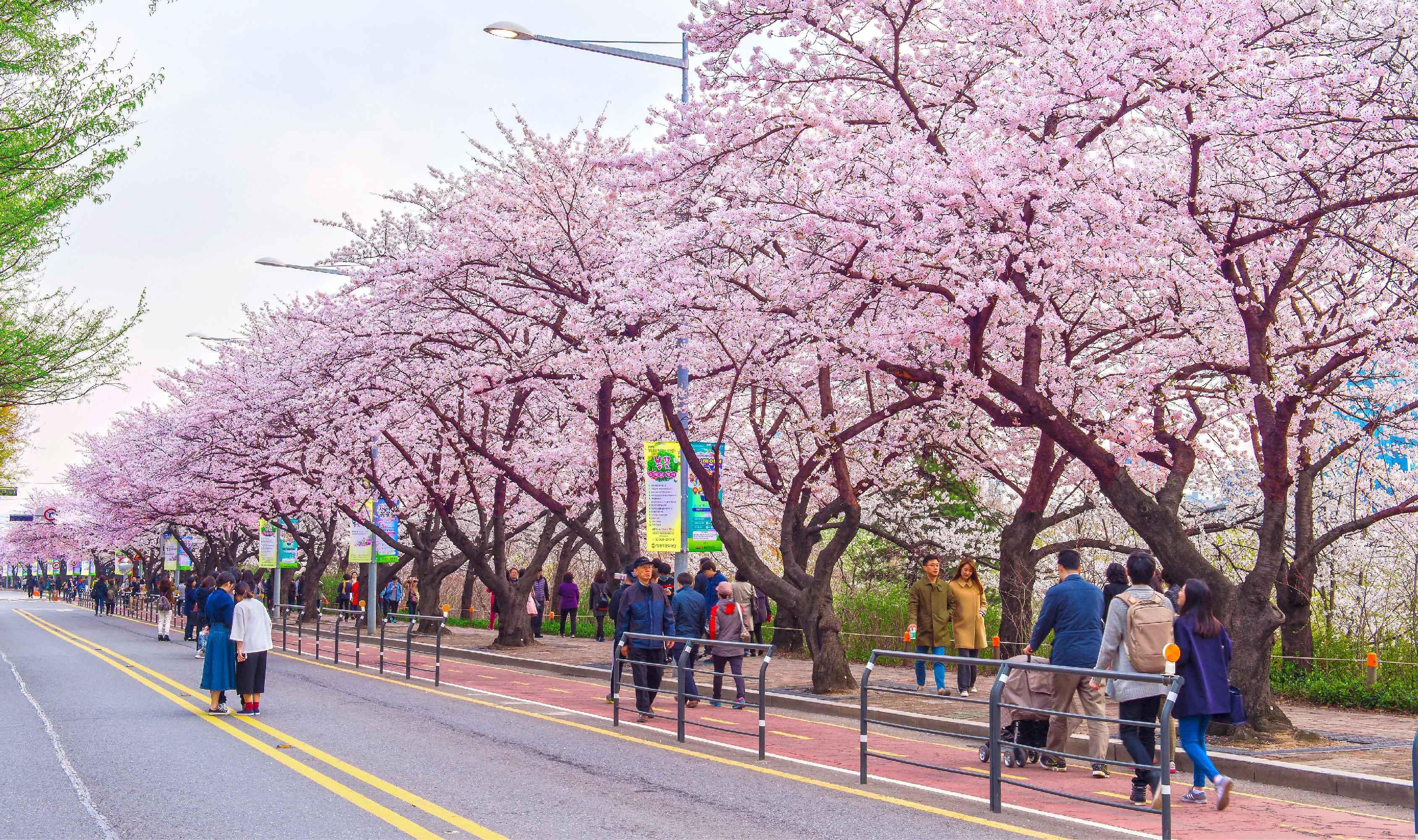 ทัวร์เกาหลี สวนสนุกเอเวอร์แลนด์ อุทยานแห่งชาติซอรัคซาน 5วัน 3คืน บินแอร์เอเชีย X (XJ)