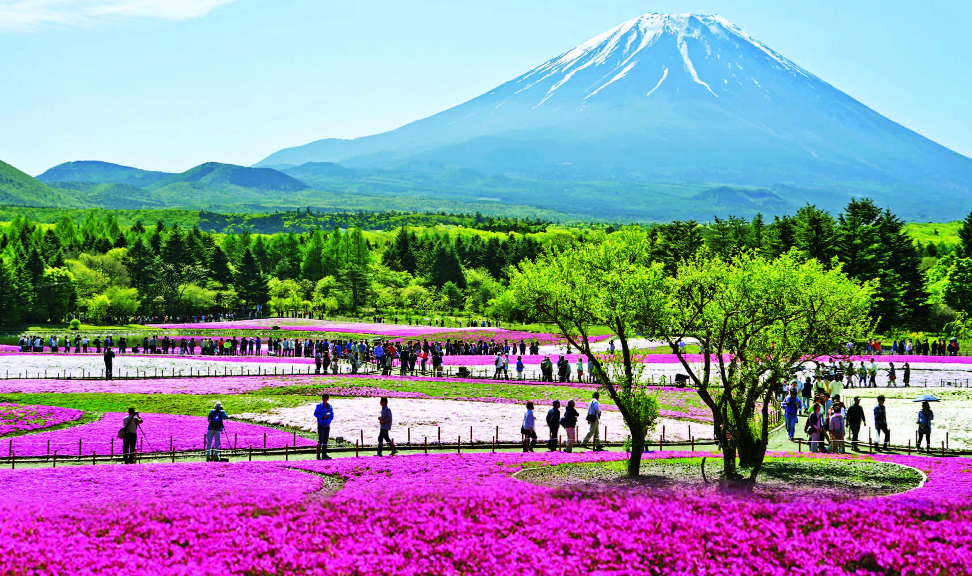 ทัวร์ญี่ปุ่น WoW! Pink Moss โตเกียว ฟูจิ พิงค์มอส 4วัน 3คืน บิน XJ
